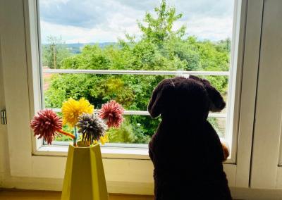 Hund schaut zum Fenster raus